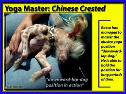 "Chinese Crested Dog at ""One with Self"""