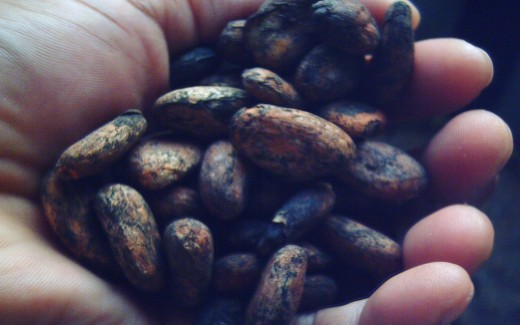 My Sun-Dried Cocoa Seeds (Photo by Travel Man)