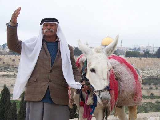 A man and his donkey on the Mt. of Olives, Jerusalem