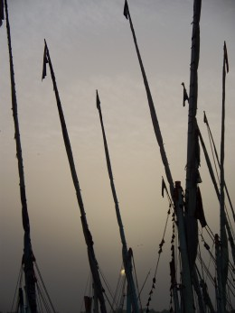 The masts of many feluccas along the Nile River, Luxore, Egypt
