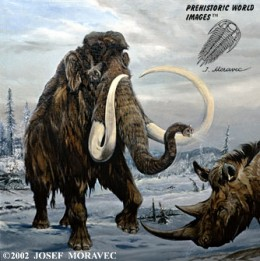 Wooly Mammoth  (Pleistocene Period 10,000 years ago)