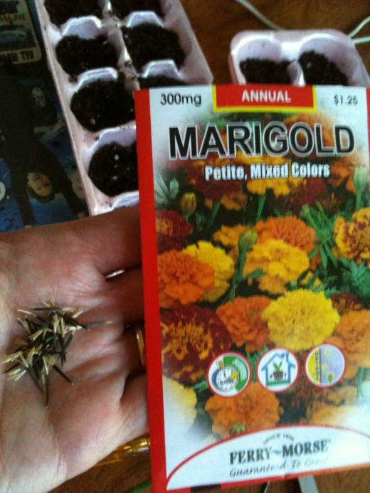 Marigolds deter pests and encourage pollinators...love the colors too