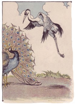 Short Stories : The Peacock and the Crane.