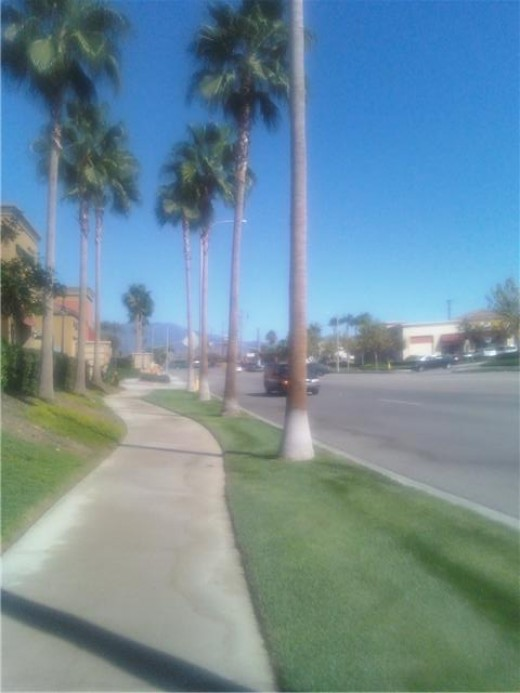 People still love the look of palm trees, so many shopping centers continue with this landscaping theme along streets.
