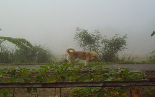 My dog, Brownie  and the Fog (Photo by Travel Man April 16, 2011)