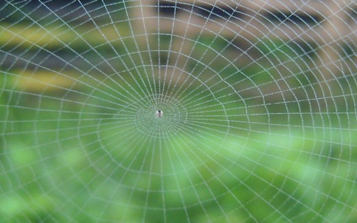 The Tiny Spider & The Web (Photo by Travel Man)