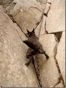 Mountain Climbing Dog