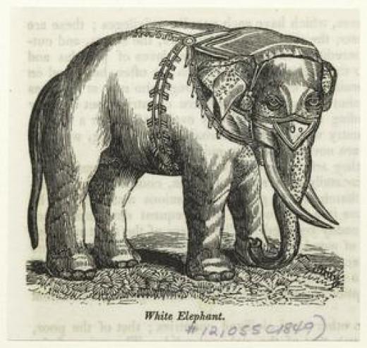 White elephant, 1849.