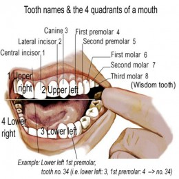 The structure of human teeth is designed primarily for handling vegetation.