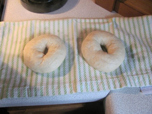 Two Bagels resting after being boiled - before being put on prepared pan
