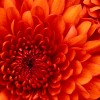 m.sweet profile image