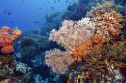 Why It Is Worth Visiting the Bunaken Sea Park in Indonesia