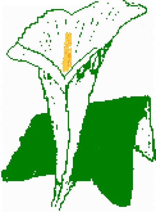 The Easter Lily commemorates those who died fighting for Irish independence at Easter 1916.