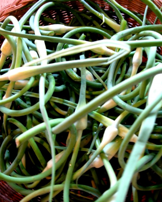 Garlic scapes are an early season vegetable at La Vista CSA.
