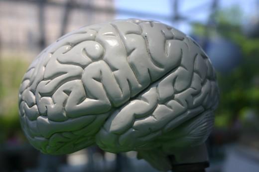 Representation of a human brain
