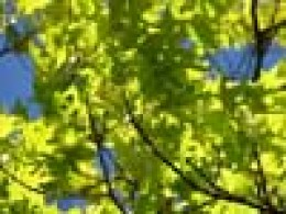 Trees also release pollen in springtime