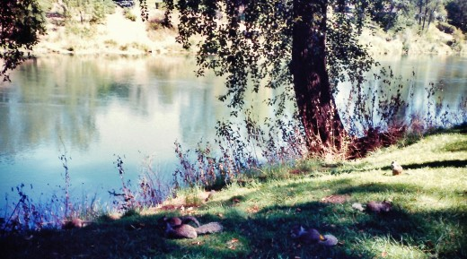 Rogue River and squirrels in Riverside Park