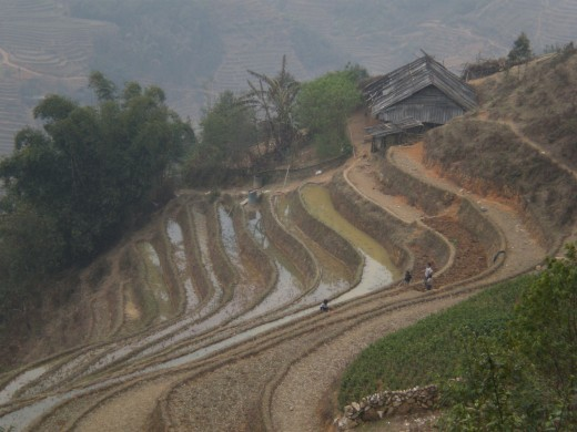 Rice Terraces, Hoang Lien Mountains, Sapa, Vietnam.