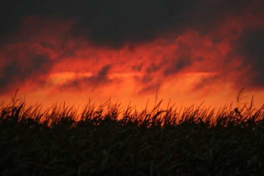 Fire in the fields...not really; this is another gorgeous Kansas sunset