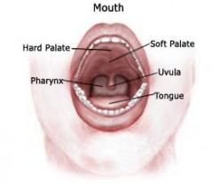 Oral Cancer - Causes, Symptoms and Diagnosis