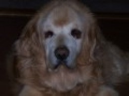 Clyde 1996-2008