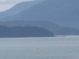 Many Shades of Blue  in Alaska. Humback Whale Barely Visible