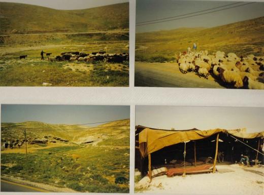 Bethlehem, Shepferd Fields, Israel