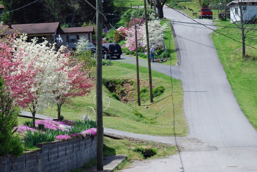 The up and down nature of Hot Springs meandering through the beautiful spring flowering trees.