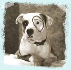 Petey from the Little Rascals was a pit bull.