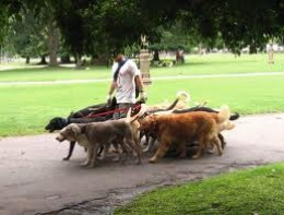 walking dogs can be done all at one time