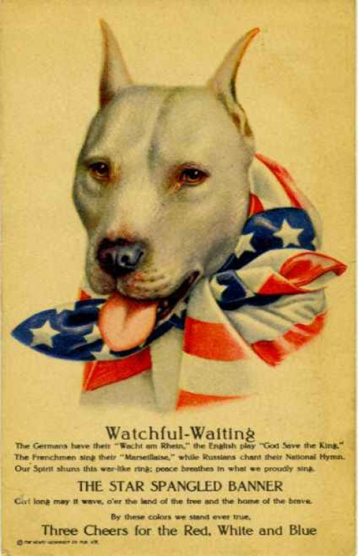Stubby, the WWI pit bull