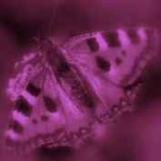 Butterfly67 profile image
