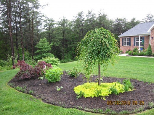 Creating a new planting bed in the front yard planting for Ornamental trees for flower beds