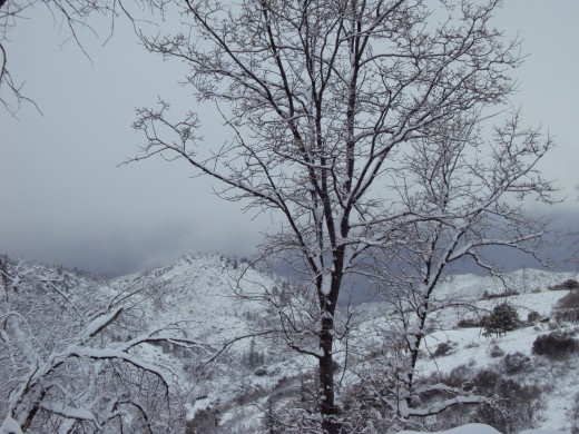 This snowy picture taken in Lake Arrowhead, California gives me to verve to go sledding.