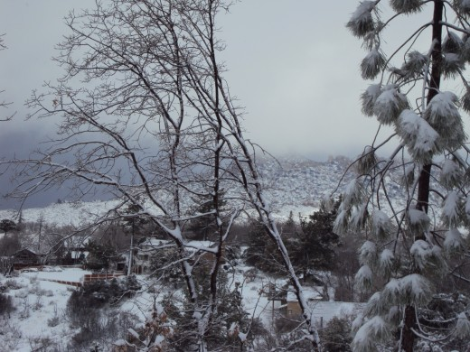 Snow and trees are abounding in the San Bernardino Mountains.