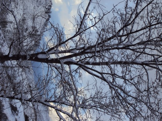 A sideways picture of a tree I took that was dusted with snow.