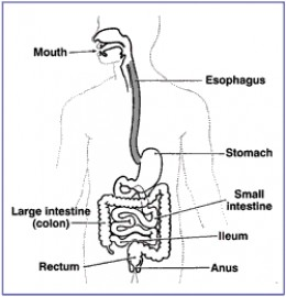 Antacids are used for Gastric distress