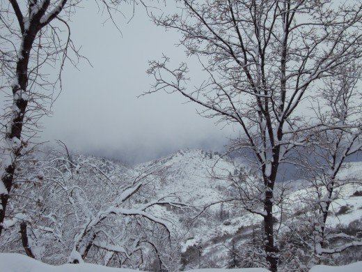 The trees are covered in snow.