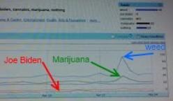 Online Trends: Marijuana More Popular Than Joe Biden