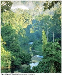 Tropical Rain Forest are NOT meant to be destroyed and consumed.