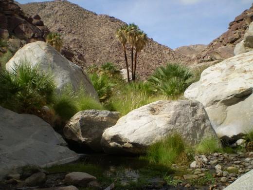 Borrego Palm Canyon, Anza-Borrego Desert State Park.