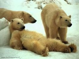If this polar bear can afford to be lazy, then certainly you can. . .