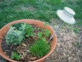 A Garden Project: Make A Teapot Planter