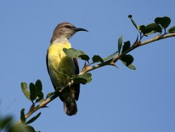 The relaxing sounds of nature to soothe and help you beat stress - birds of Bangalore
