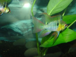 Top 10 Tropical Fish For Beginners