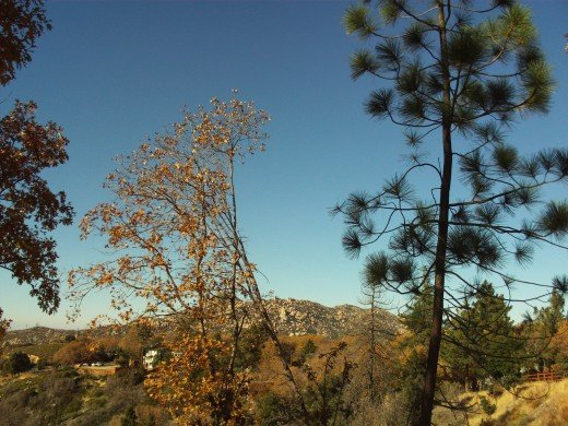Trees blocking the view of The Pinnacles.