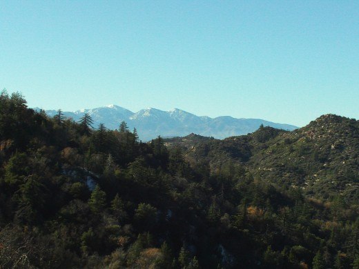 Snow around the trees with the view of Mount Baldy.