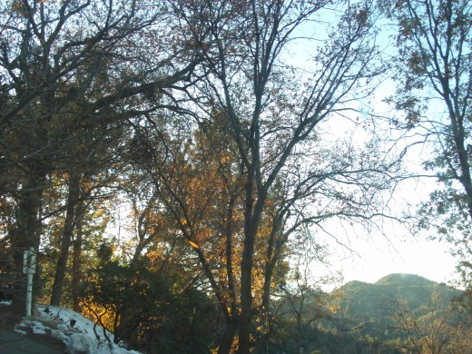 The forest in the afternoon.