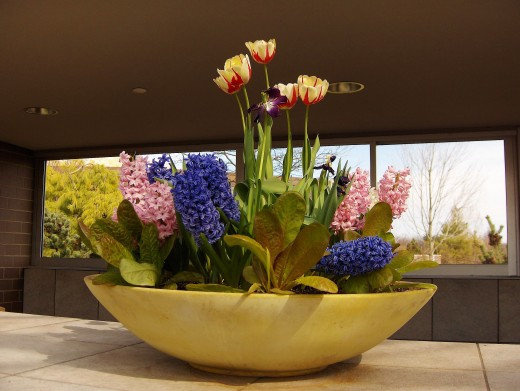 HYACINTHS AND TULIP DISPLAY - FREDERIK MEIJER GARDENS