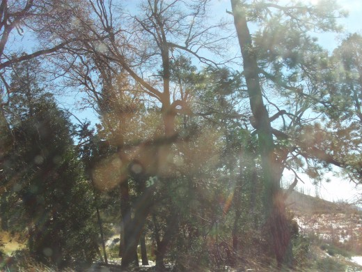 Trees with sun glistening through on the Rim of the World Highway.
